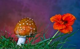 Гриб и цветок Стоковые Фото