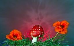 Гриб и цветок Стоковые Фотографии RF