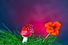 Гриб и цветок Стоковое Изображение RF