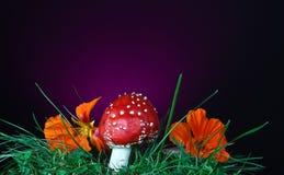 Гриб и цветок Стоковое Изображение