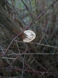 Гриб красивого леса деревянный n стоковое изображение rf