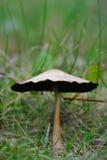 гриб крупного плана стоковое изображение rf
