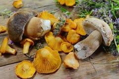 Гриб лисички на деревенском деревянном столе Сырцовая свежая предпосылка гриба лисички Стоковые Фотографии RF