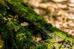 гриб малый Стоковые Изображения RF