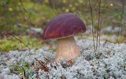 гриб мха Стоковые Изображения