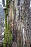 гриб на дереве Стоковая Фотография