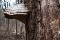 гриб на дереве Стоковое Изображение