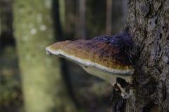 Гриб на дереве Стоковые Фото