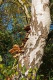 Гриб на дереве Стоковые Фотографии RF
