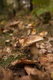 Гриб на земле леса Стоковое Фото