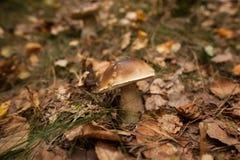 Гриб на земле леса Стоковая Фотография RF