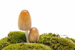 гриб одичалый Стоковое Фото