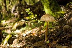гриб одичалый Стоковое фото RF