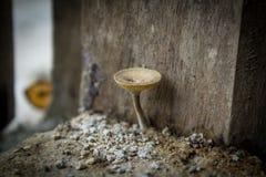гриб одичалый Стоковая Фотография