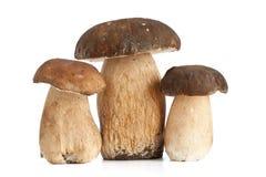 гриб подосиновика Стоковые Фото