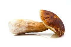 гриб подосиновика edulis Стоковая Фотография RF
