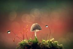 гриб пущи Стоковое Изображение
