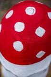 Гриб - пластинчатый гриб мухы Стоковое Изображение RF