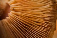 Гриб, древесина, еда, диета, коричневый цвет, Стоковые Изображения