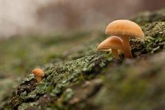 гриб семьи Стоковые Изображения RF