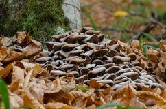 Гриб с лист осени Стоковая Фотография RF