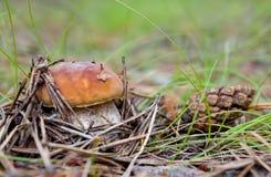 гриб травы Стоковая Фотография
