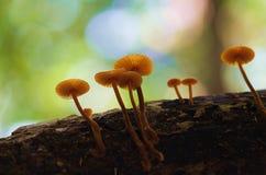Гриб тропического леса Стоковое фото RF