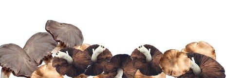 гриб урожая садовничая органический Стоковое Изображение
