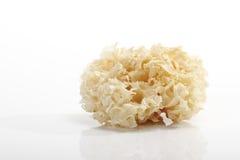Гриб цветной капусты (crispa Sparassis) Стоковая Фотография