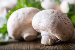 гриб Чемпионы величают в различных положениях с украшением травы стоковые фотографии rf