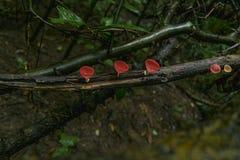 Гриб Шампань на деревянном в rainforests& x28; низкое key& x29; Стоковые Фотографии RF