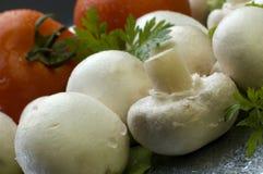 гриб Стоковая Фотография RF