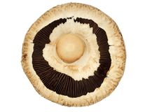гриб Стоковые Фотографии RF