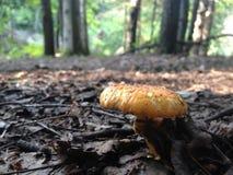 гриб Стоковое фото RF