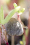 гриб Стоковое Изображение