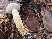 гриб Стоковые Изображения