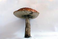 гриб Стоковые Фото