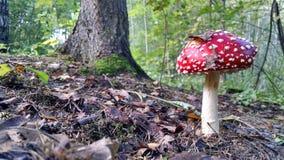 гриб Стоковое Изображение RF