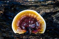 гриб Стоковая Фотография
