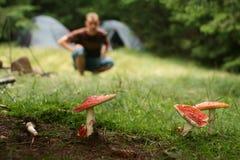 гриб amanita ядовитый Стоковая Фотография