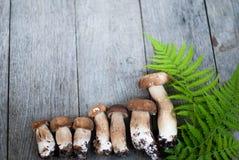 Гриб Porcini на деревянной предпосылке Стоковые Фото