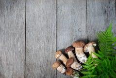 Гриб Porcini на деревянной предпосылке Стоковая Фотография RF