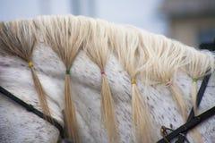 Грива белой лошади стоковые изображения rf