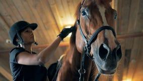 Грива ` s лошади чистится щеткой девушкой жокея сток-видео