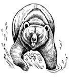 гризли медведя коричневое иллюстрация вектора