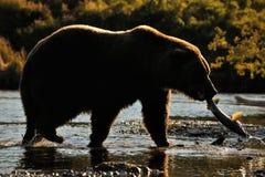 гризли рыболовства медведя Стоковые Изображения