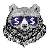 Гризли стекла большого одичалого медведя нося с иллюстрацией знака доллара с диким животным для футболки, эскиза татуировки Стоковое фото RF