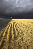 гром шторма Стоковые Изображения RF