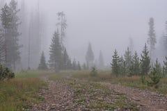 Грубая дорога режет до конца туманный лес Стоковое фото RF