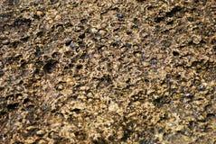 грубая каменная поверхность Стоковая Фотография RF